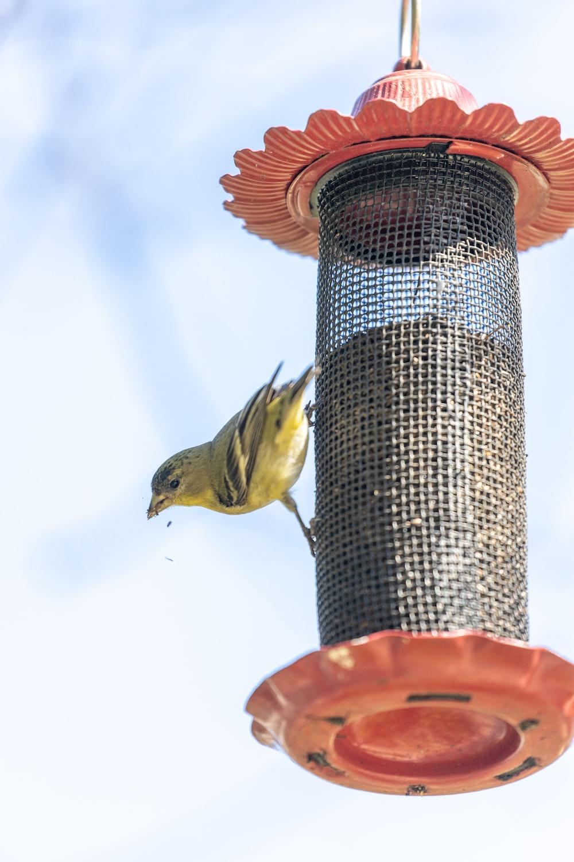 yellow bird on black metal stand during daytime