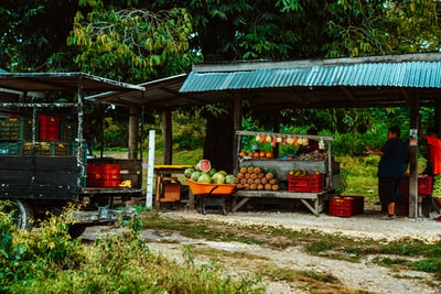 fruits on brown wooden table under blue canopy tent during daytime belize teams background
