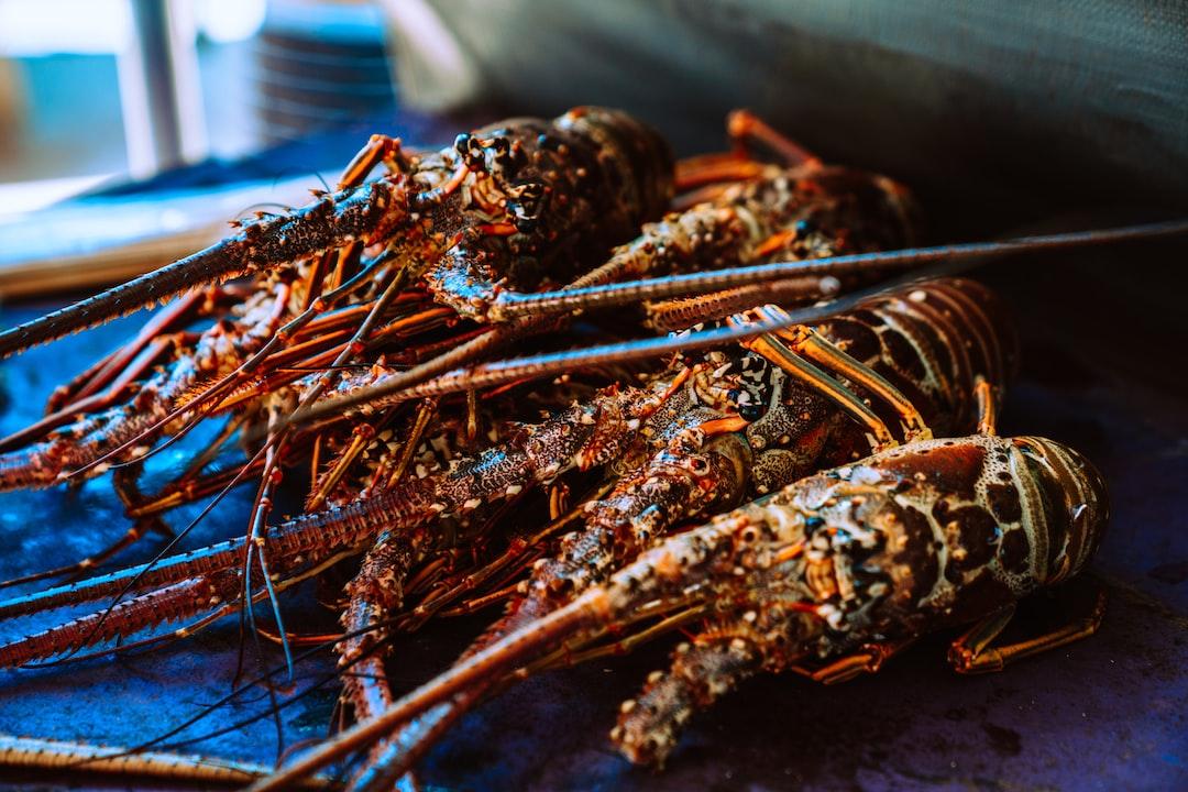 Caribbean spiny lobsters (Panulirus argus)