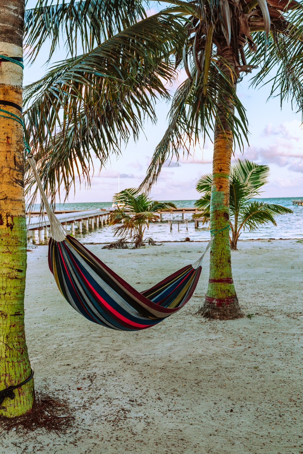 blue red and yellow hammock hanged on palm tree near beach during daytime