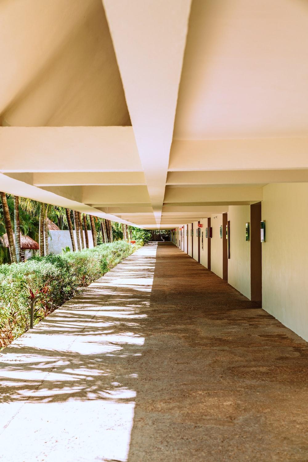 brown concrete pathway between green plants