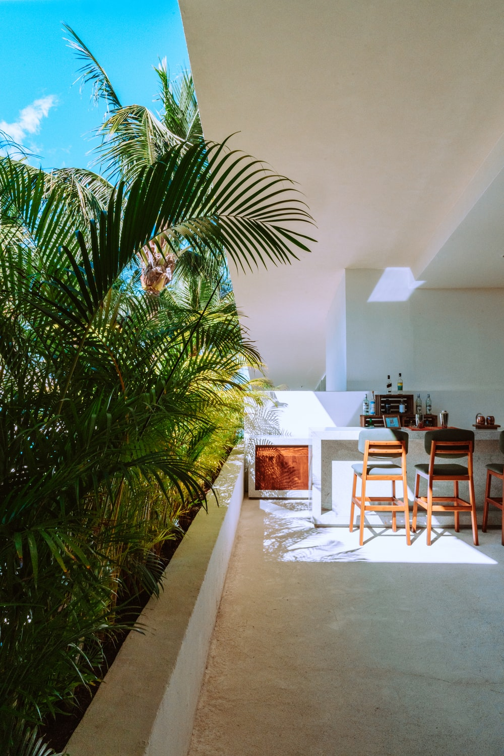 green palm tree near white wall