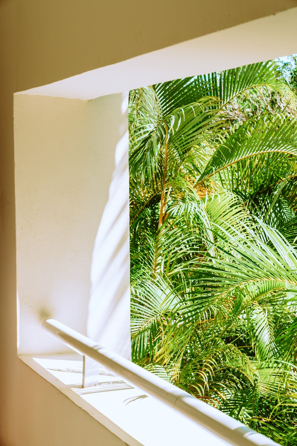 green palm plant beside white wall