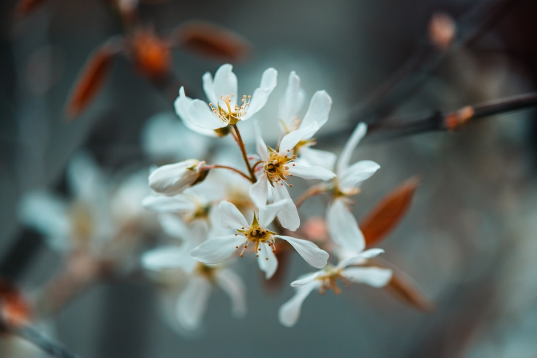 White Flowers In Tilt Shift Lens - unsplash
