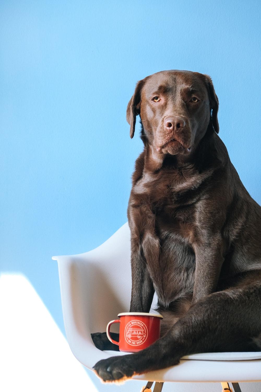 brown short coated dog sitting on gray carpet
