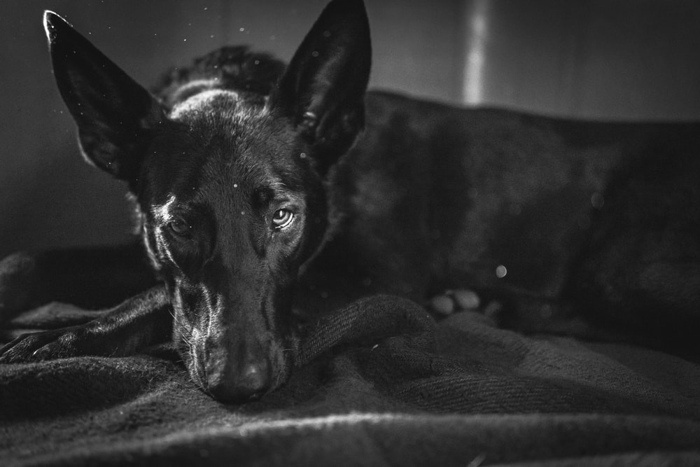 black short coated dog on black textile