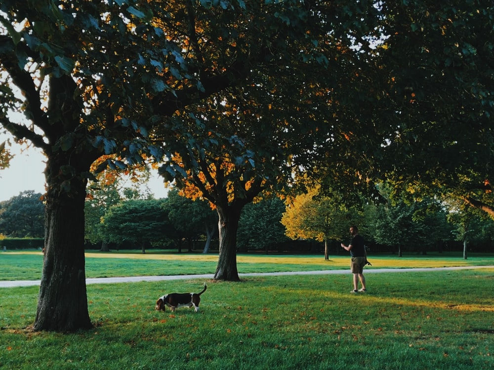 people playing on green grass field near trees during daytime