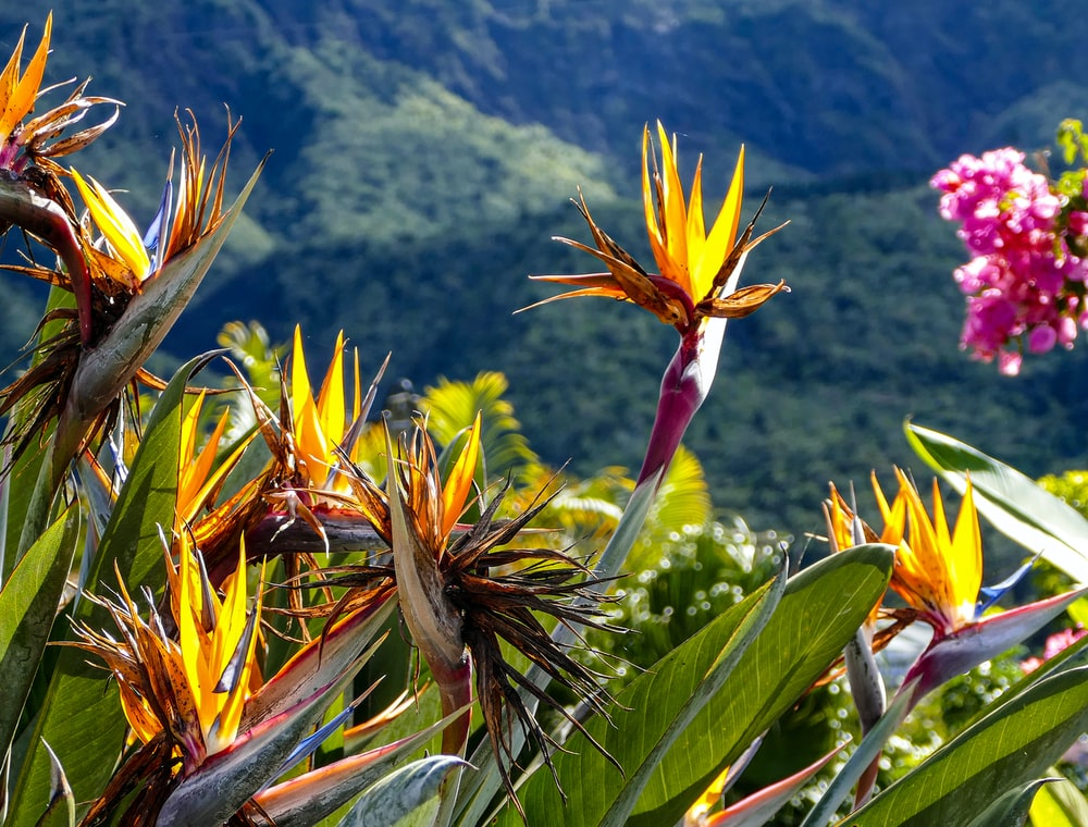 Partir vivre seule à la Réunion