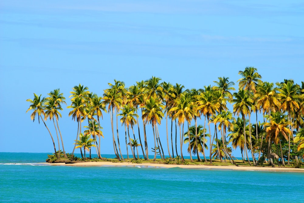 coconut trees on beach during daytime
