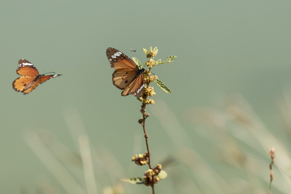 brown and black butterfly perched on yellow flower in close up photography during daytime