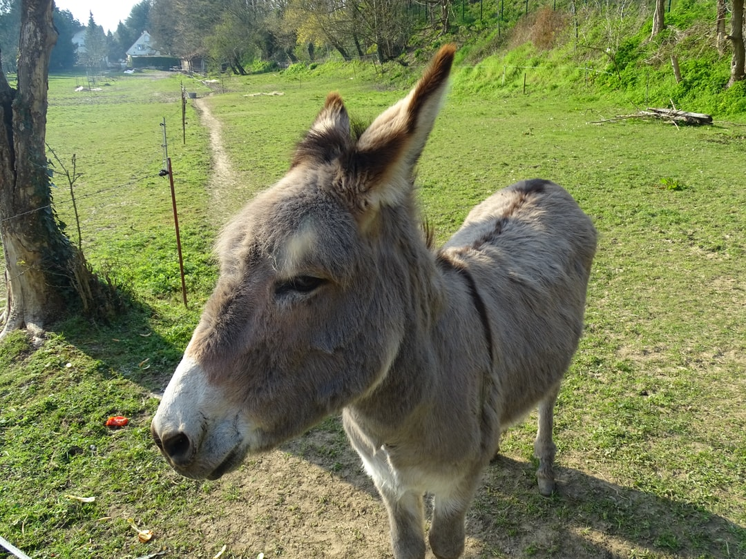 Who's that donkey?