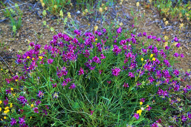 Photo of wild purple and yellow flowers growing outdoors