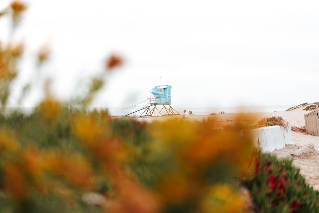 A lifeguard tower rising above some flowers in the foreground.