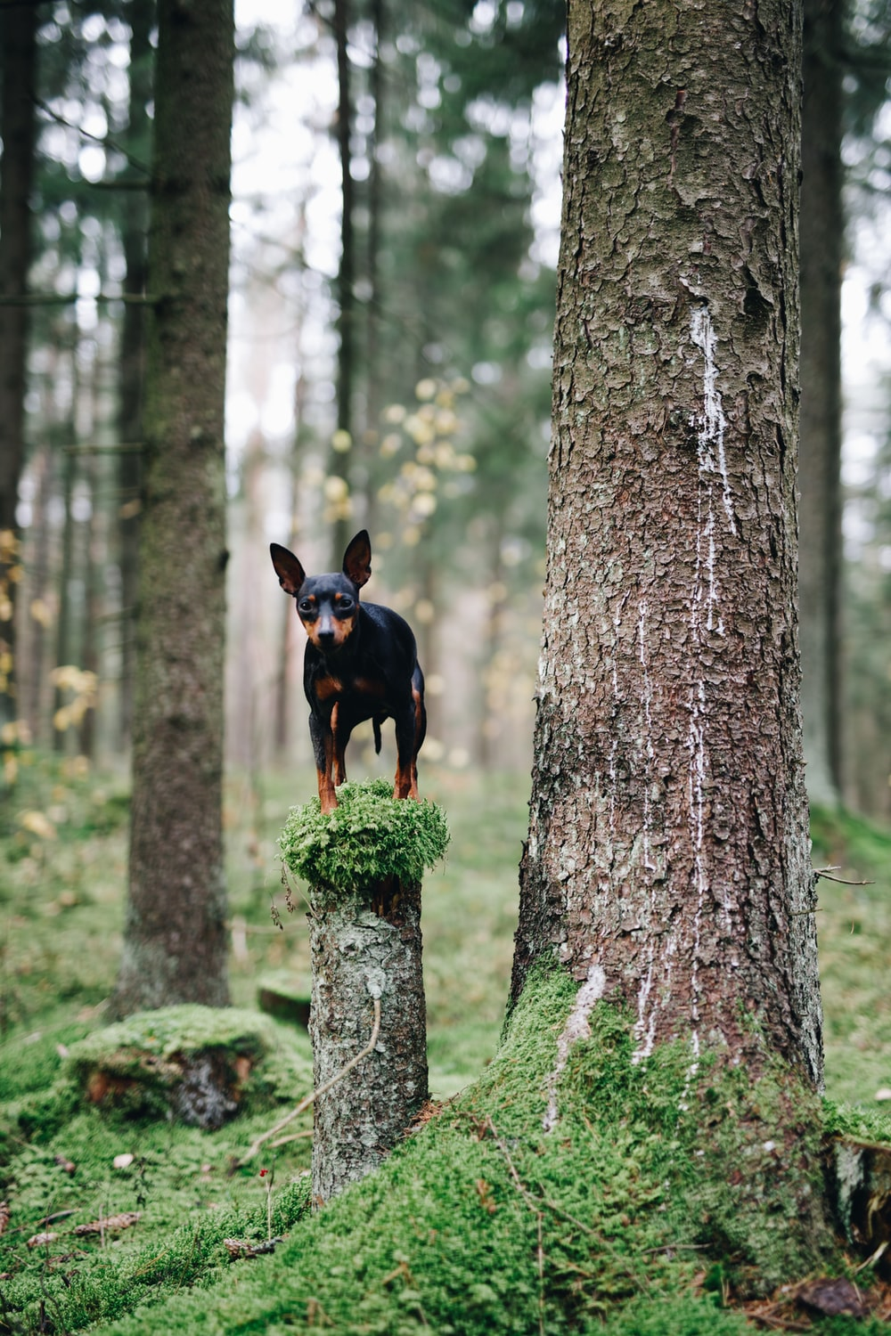 black and tan short coat small dog on tree trunk during daytime