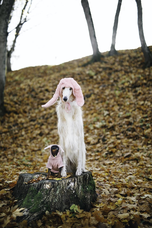 white long coated dog sitting on brown tree log during daytime