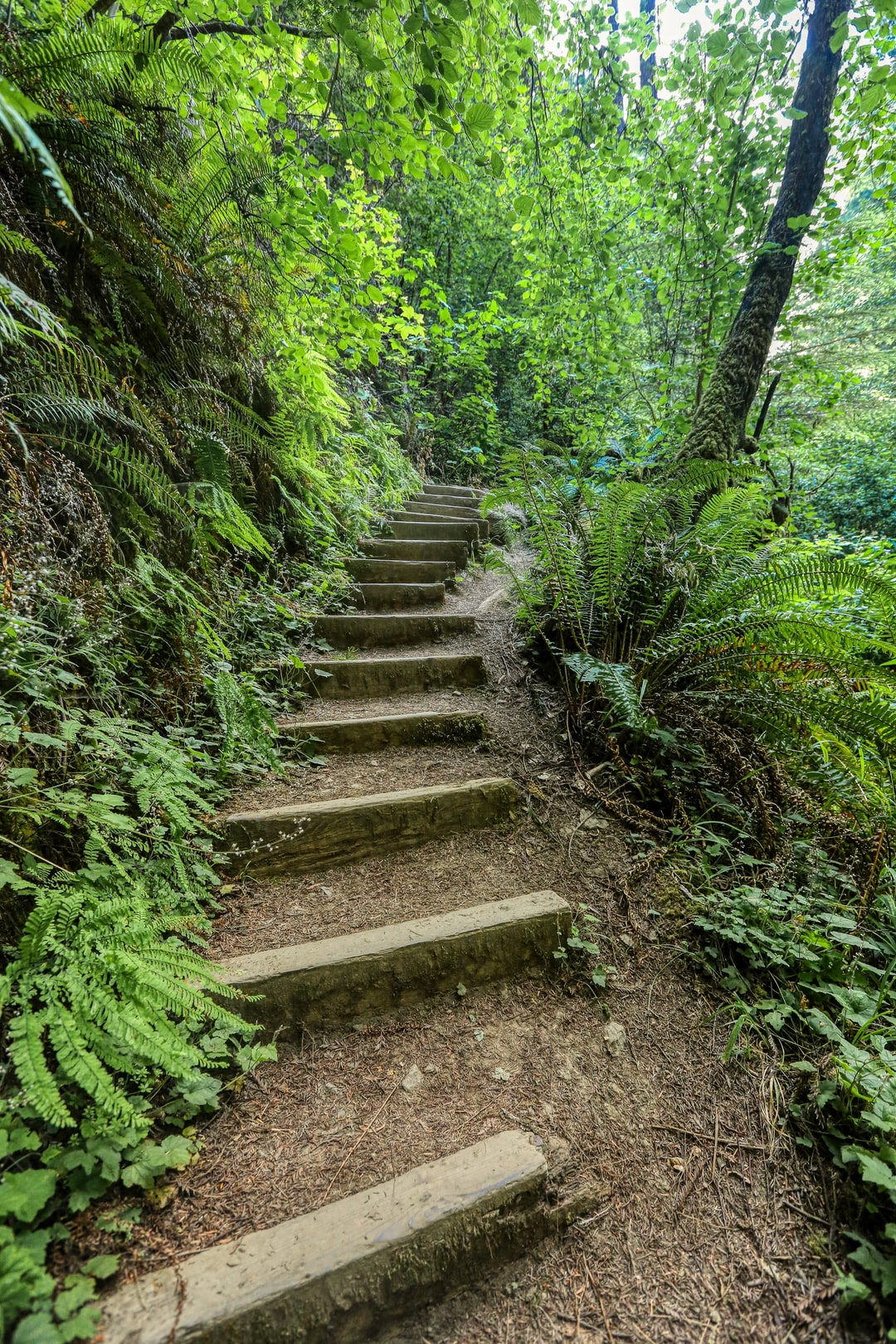 Often times people think the steps are just to help you get up the mountain, but most times they also help the trail by not allowing erosion to create ruts and wash away. So they are beautiful, helpful and practical.