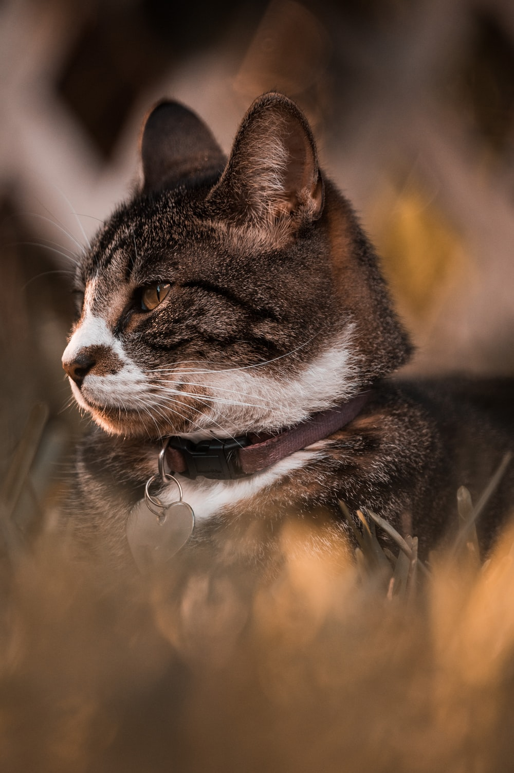 brown tabby cat on green grass during daytime