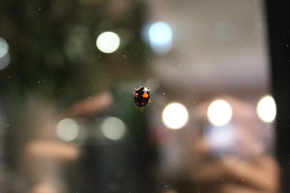 black and orange ladybug on glass