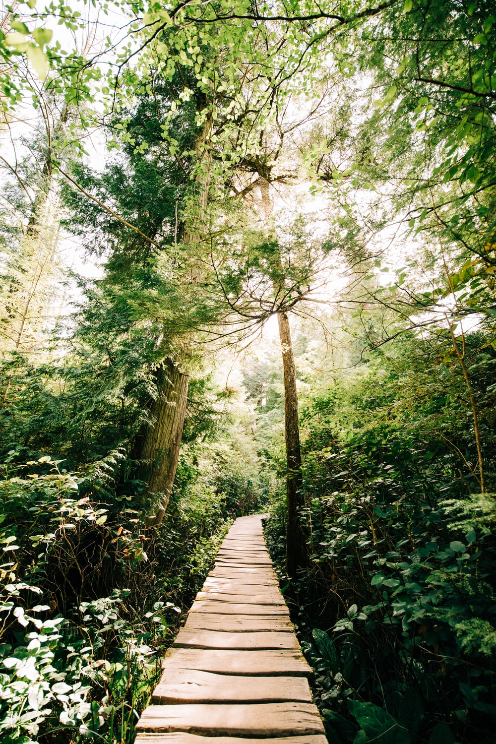 brown wooden pathway between green trees during daytime