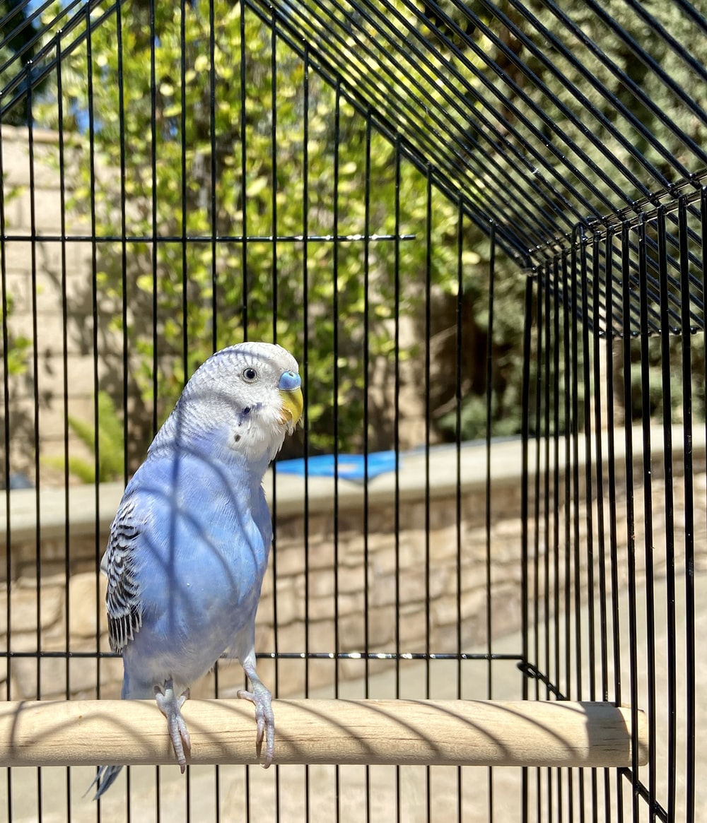 blue and white bird on brown wooden table