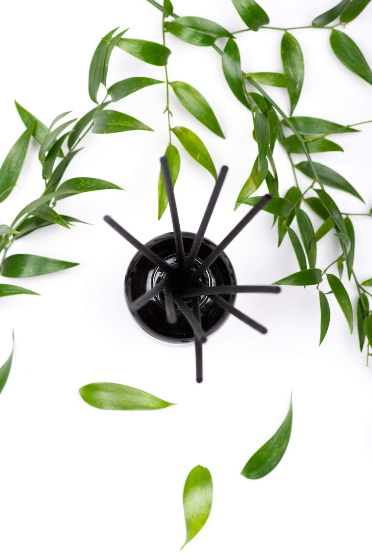 black spider on green leaves