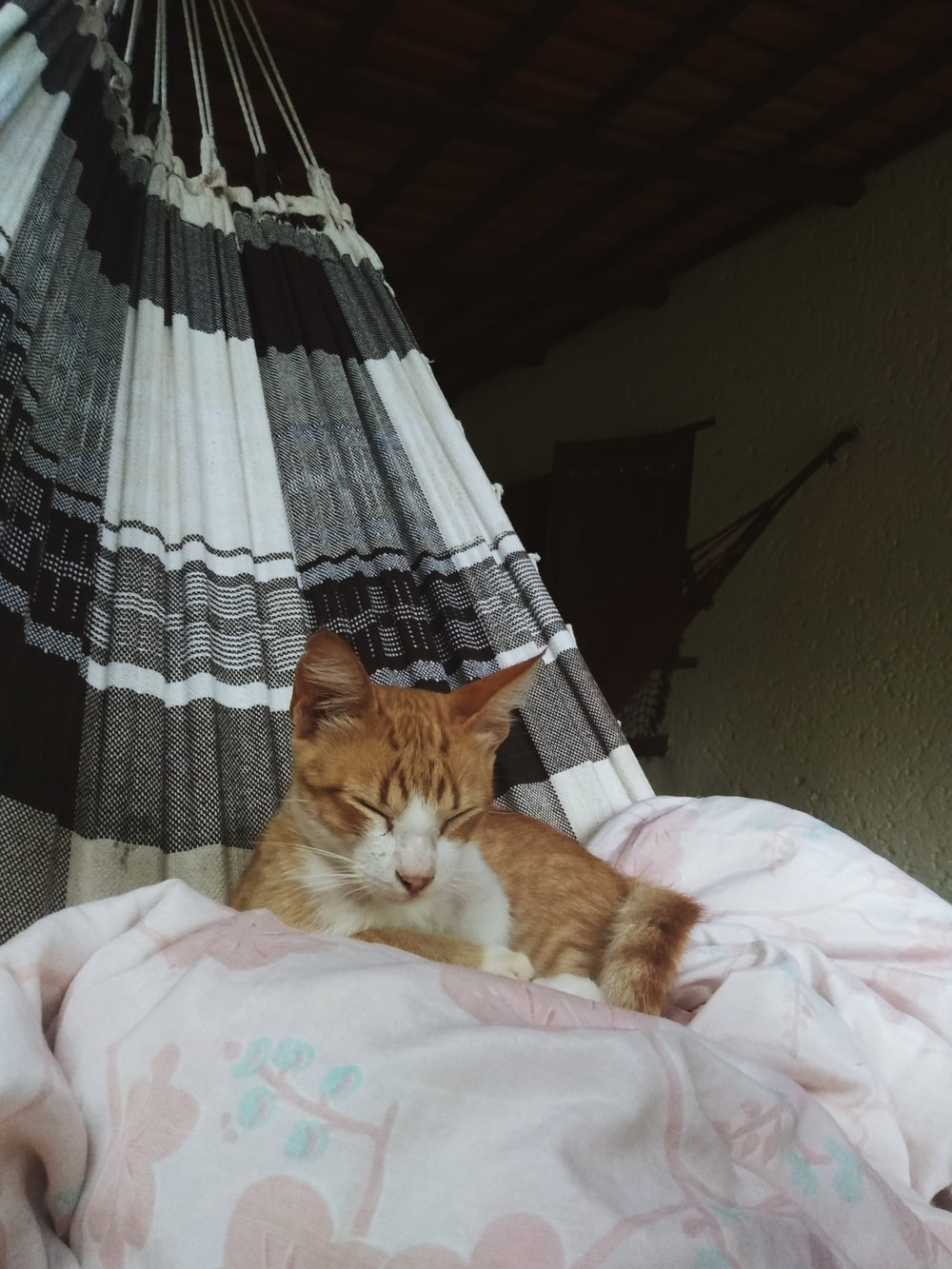 orange tabby cat lying on white and gray textile