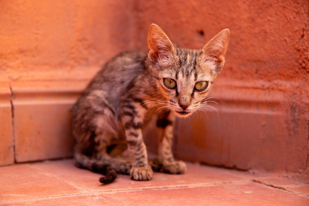 brown tabby cat on brown floor