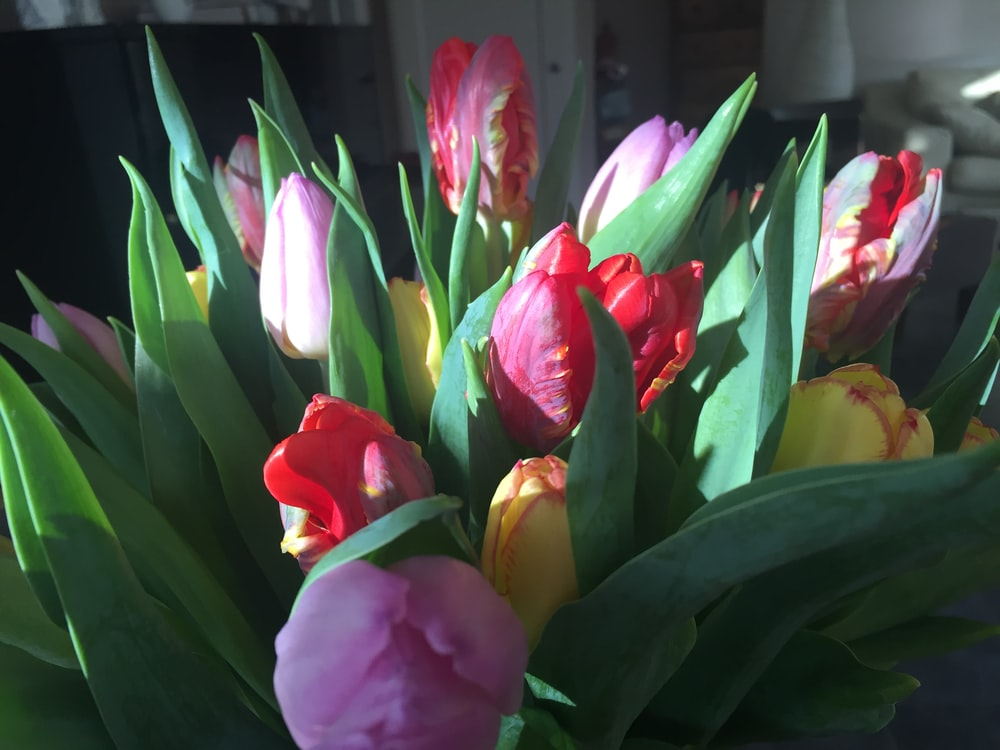 pink and yellow tulips in bloom during daytime