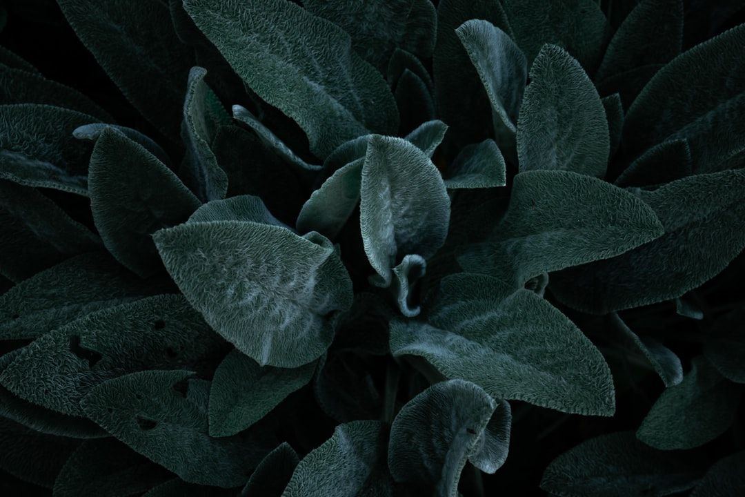 Green and Black Plant Leaves - unsplash