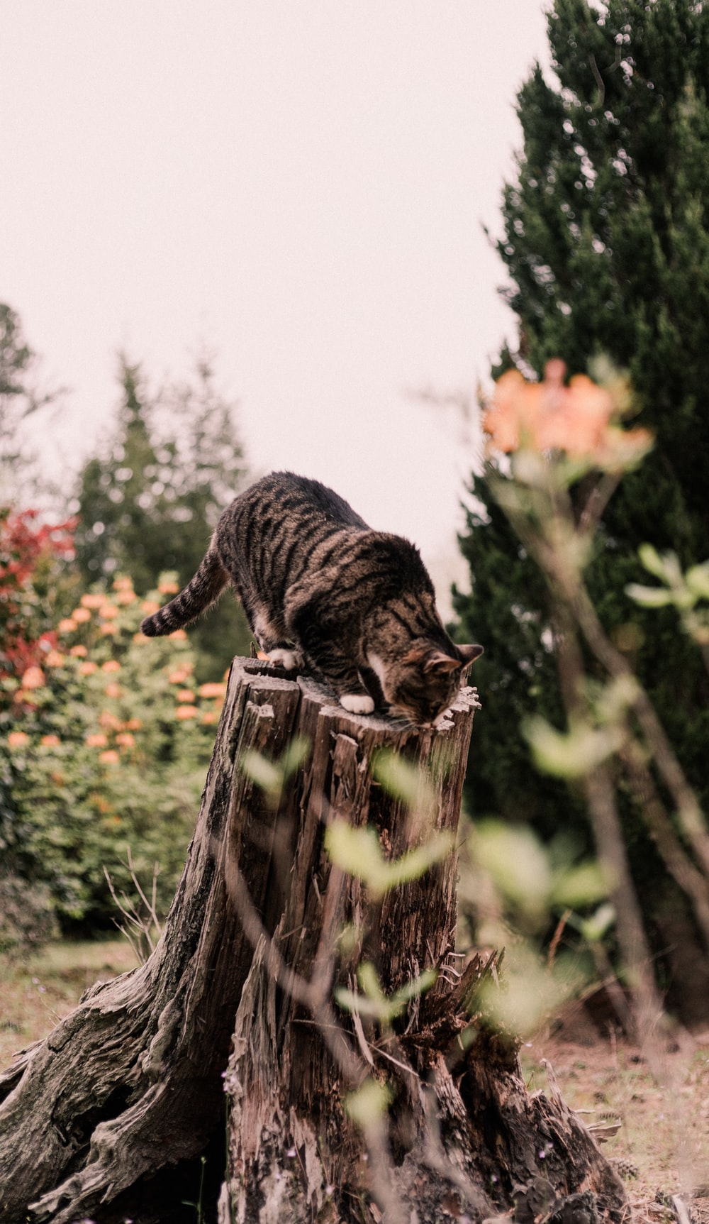 brown tabby cat on brown wooden fence during daytime