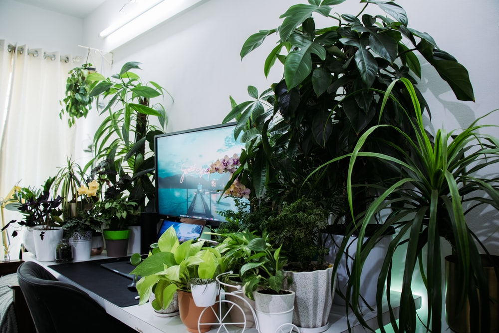 black flat screen tv turned on near green potted plant