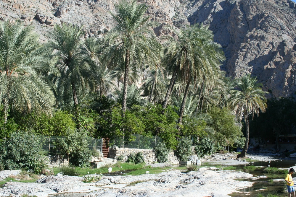 green palm trees near mountain during daytime