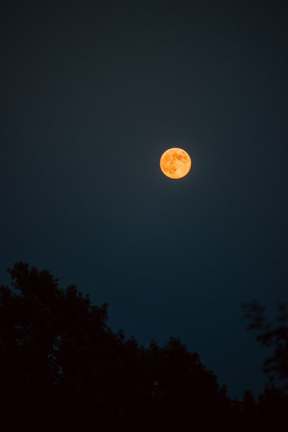 full moon over the trees