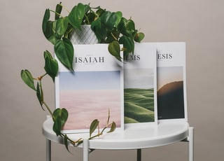 green plant on white table