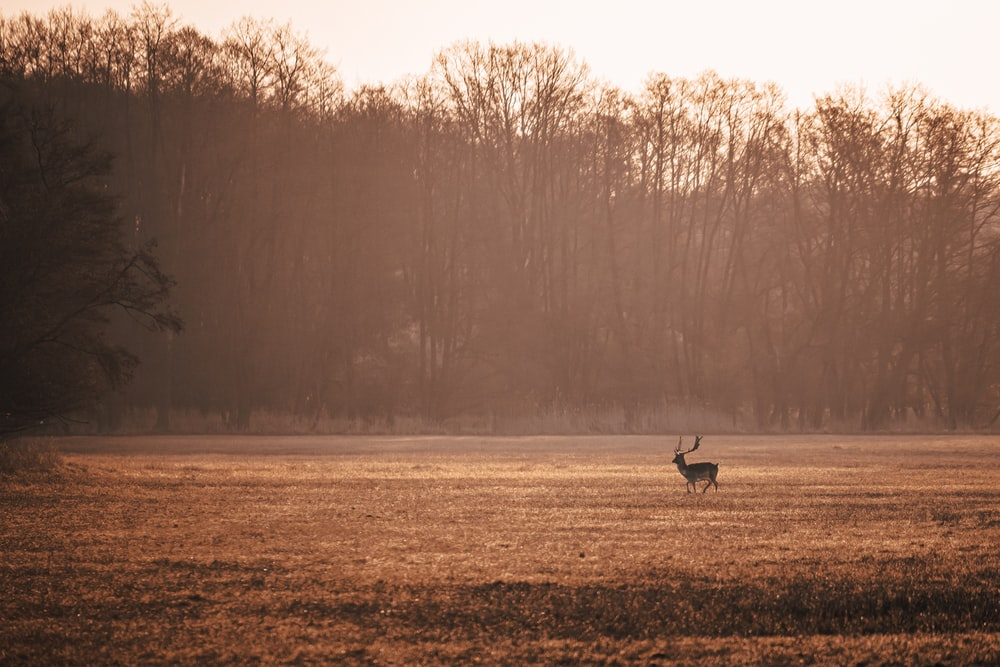 brown deer on brown grass field during daytime