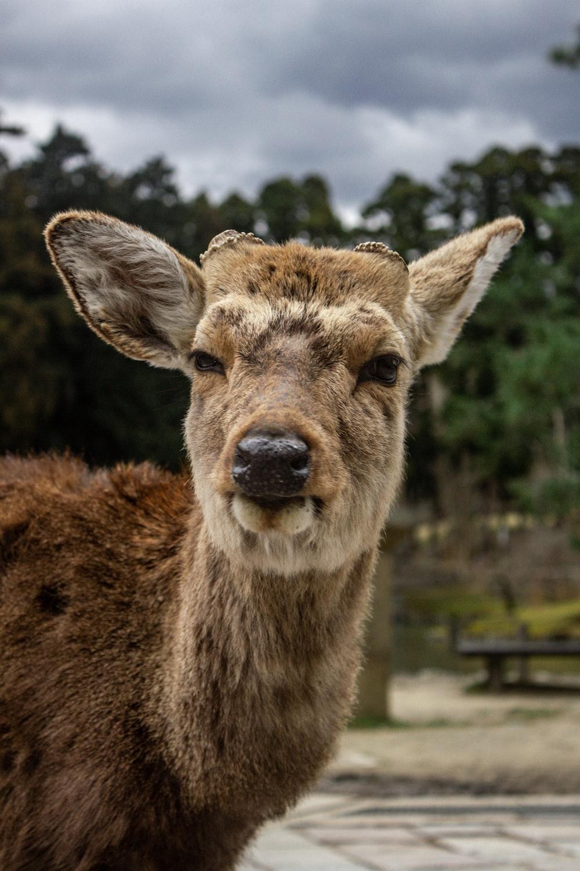 brown deer standing on green grass field during daytime