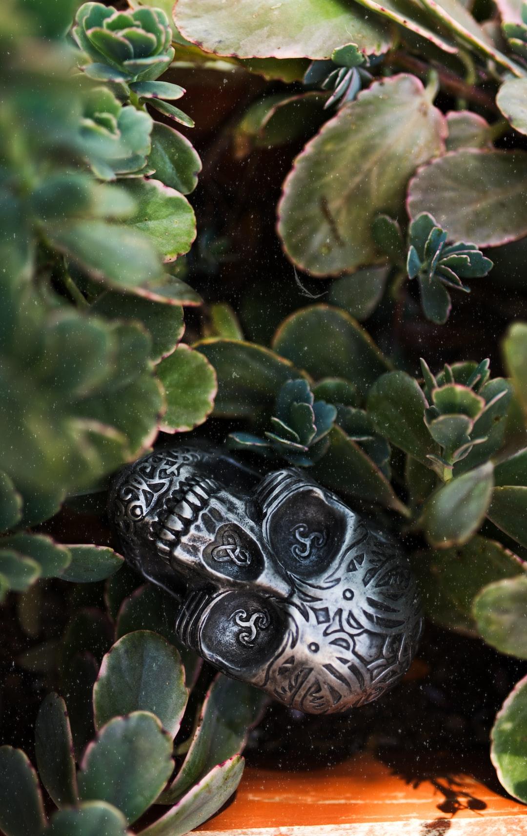 Skull nestled in some plants.