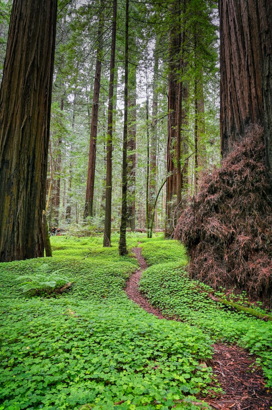 A trail running through a lush green forest