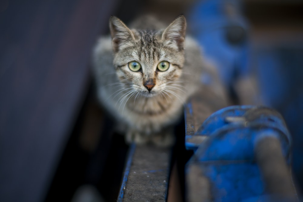 brown tabby cat on blue wooden bench