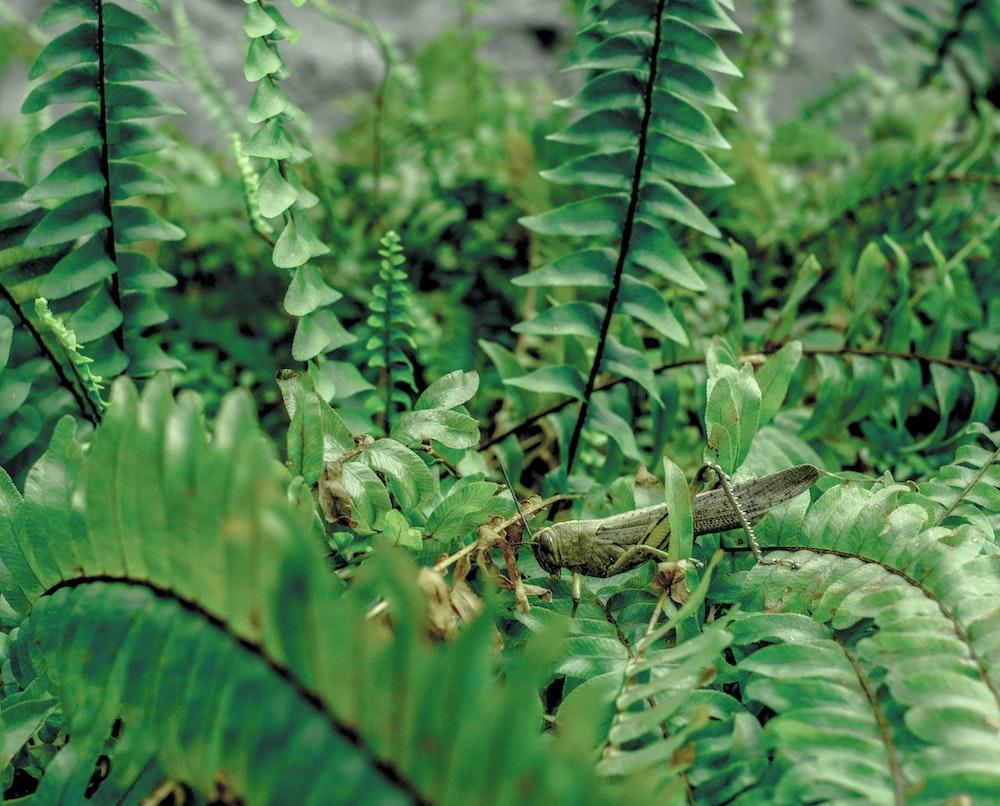 green grasshopper on green leaf plant during daytime
