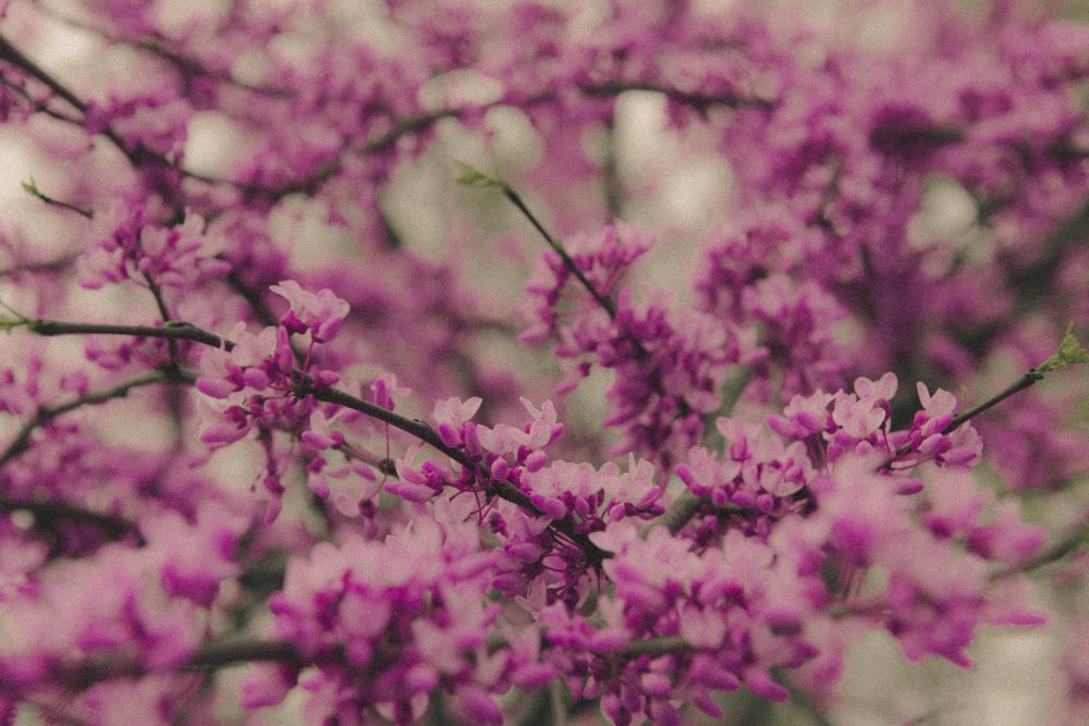 pink flowers in tilt shift lens