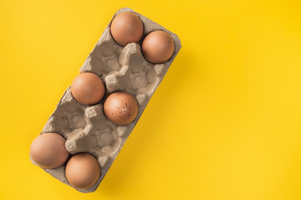brown egg on gray egg tray