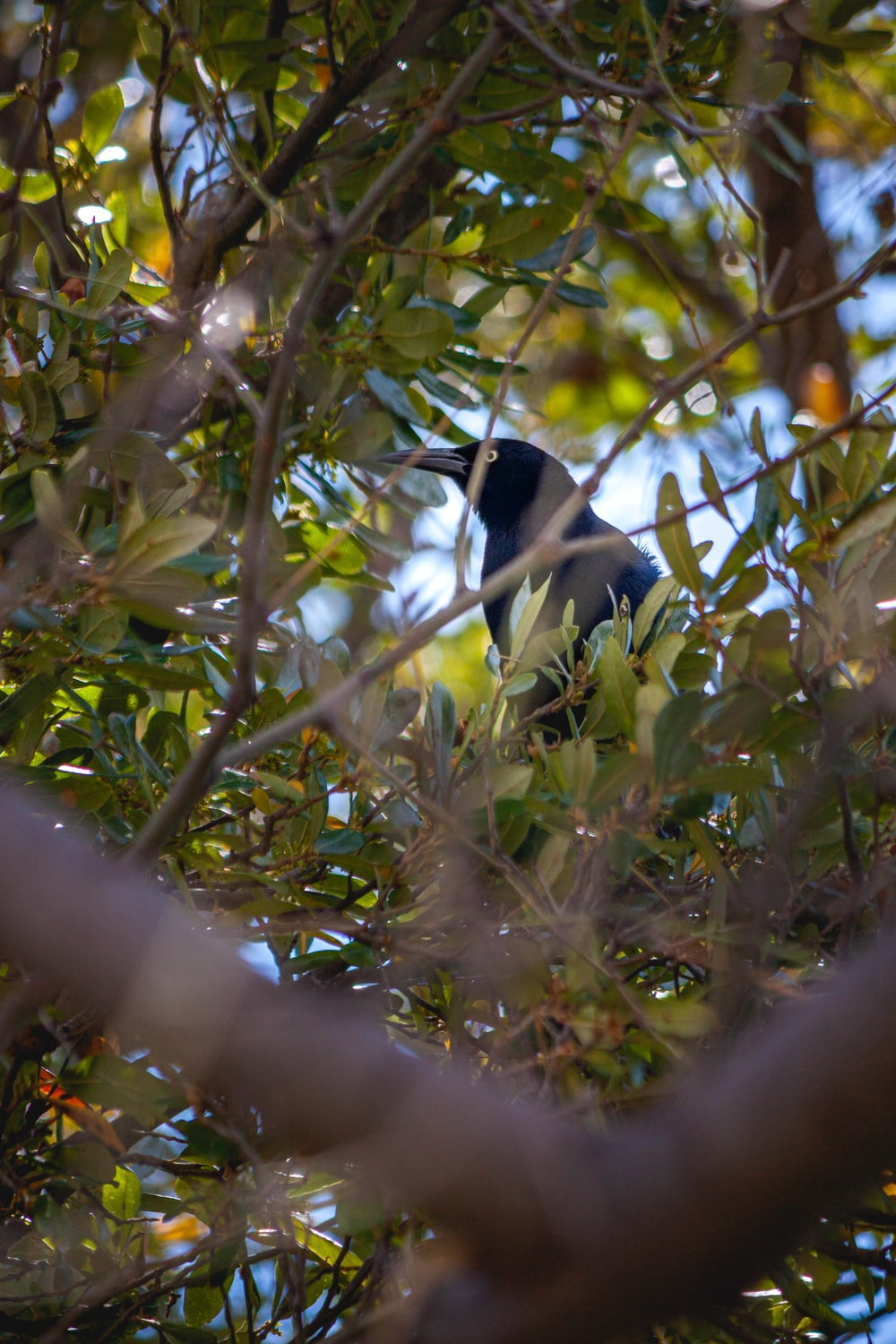 black and white bird on tree branch during daytime
