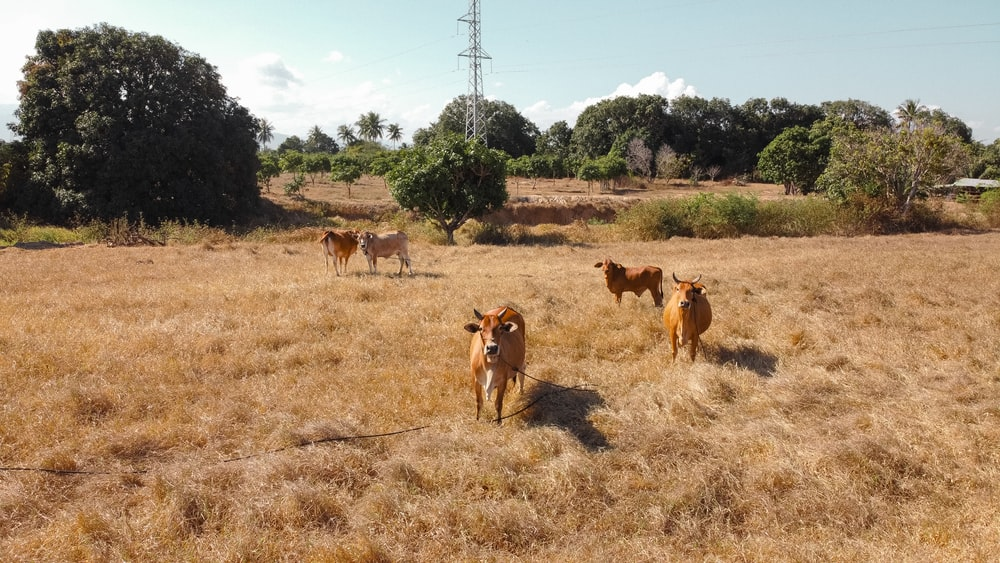 brown and white horses on brown grass field during daytime