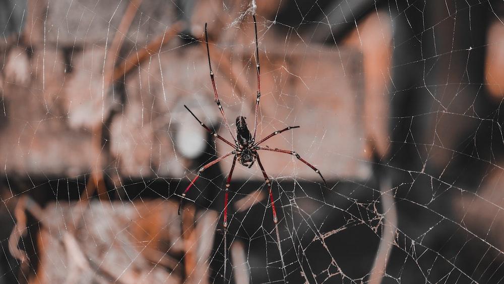 black spider on brown metal fence during daytime