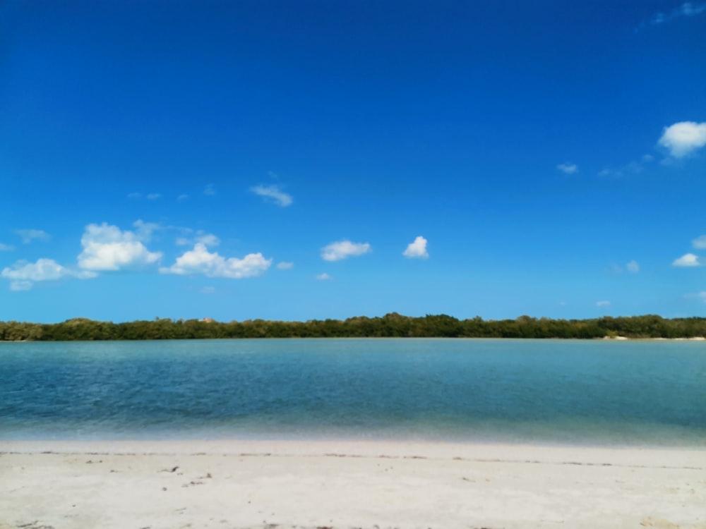green trees on white sand beach under blue sky during daytime