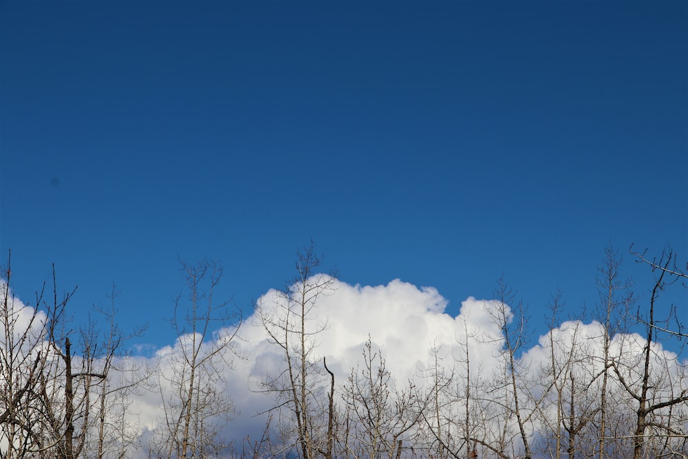 white trees under blue sky during daytime