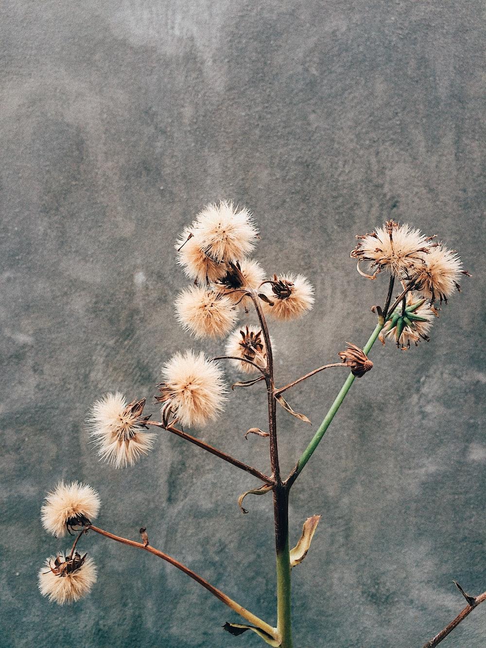 white flowers on gray textile