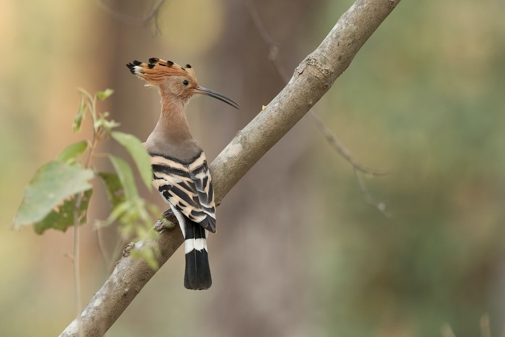 brown black and white bird on brown tree branch during daytime