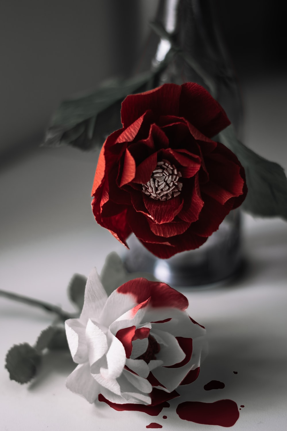 red rose in gray scale